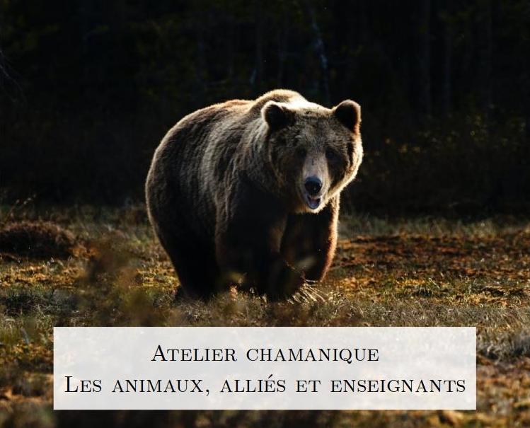 Atelier chamanique : Les animaux, alliés et enseignants